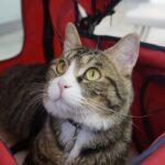 """<span class=""""title"""">愛犬・愛猫のペット保険はどうしてる?加入すべき理由と選び方のポイント</span>"""